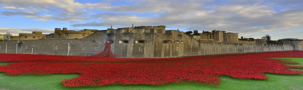 poppies at the tower of london1